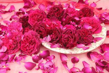 Roses ~ Open Wide ~ Love ~ God Dieux