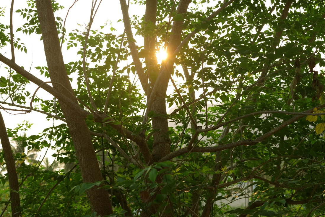 God Dieux Photography ~ Trees and sun of Arunchala
