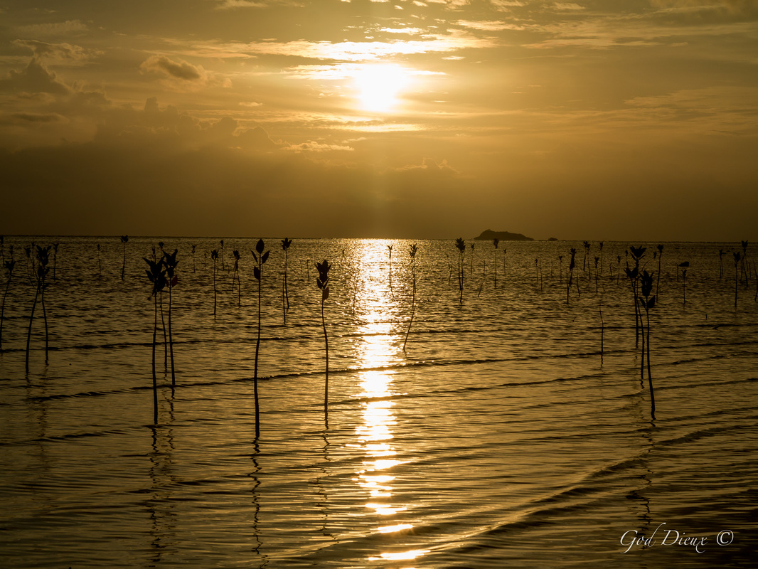 Ocean Flowers in Kho Phangan Thailand ~ God Dieux Photography